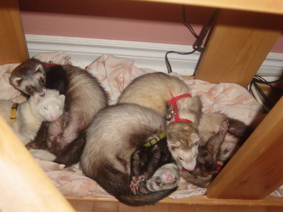 A Business of Ferrets Photo Credit: Heather Downie