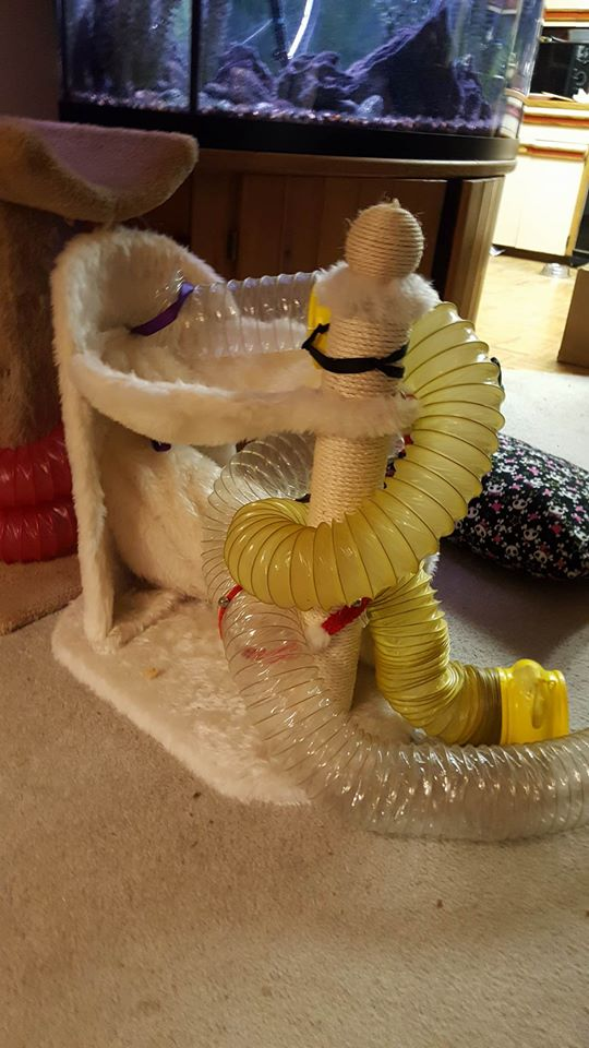 Tunnels on a Cat Tree Photo Credit: Cherie